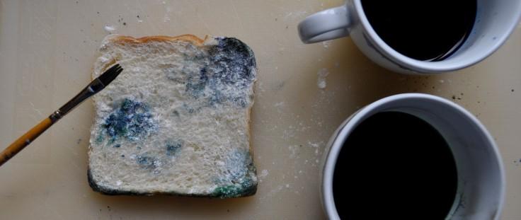 Schimmel Brot DIY